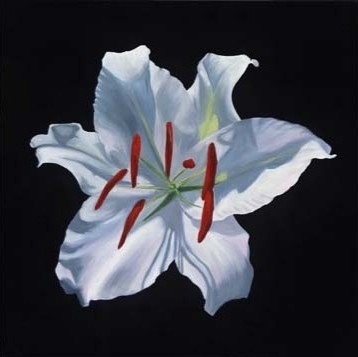 Portrait of a White Stargazer Lily by Jane Seymour